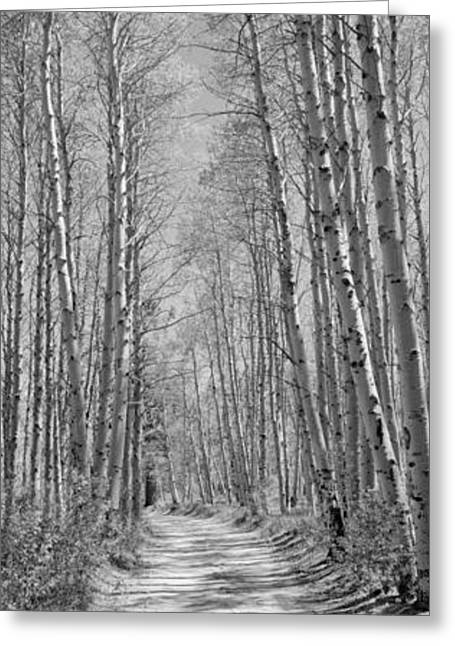 Trees Along A Road, Log Cabin Gold Greeting Card by Panoramic Images