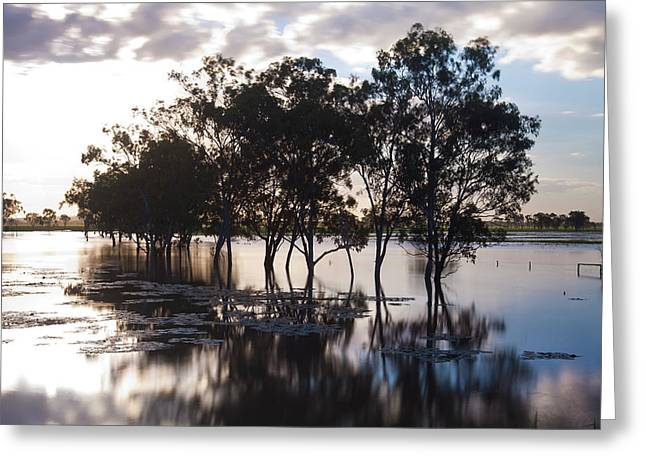 Trees And Flooded Creek Greeting Card