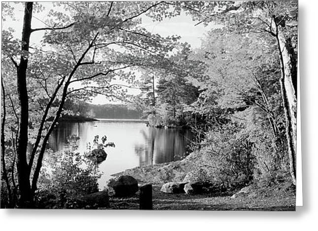 Trees At The Lakeside, Great Sacandaga Greeting Card by Panoramic Images