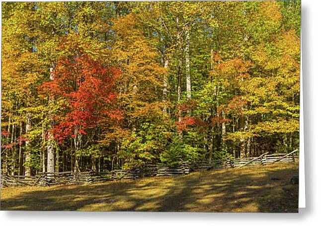Trees In A Forest, Roaring Fork Motor Greeting Card by Panoramic Images