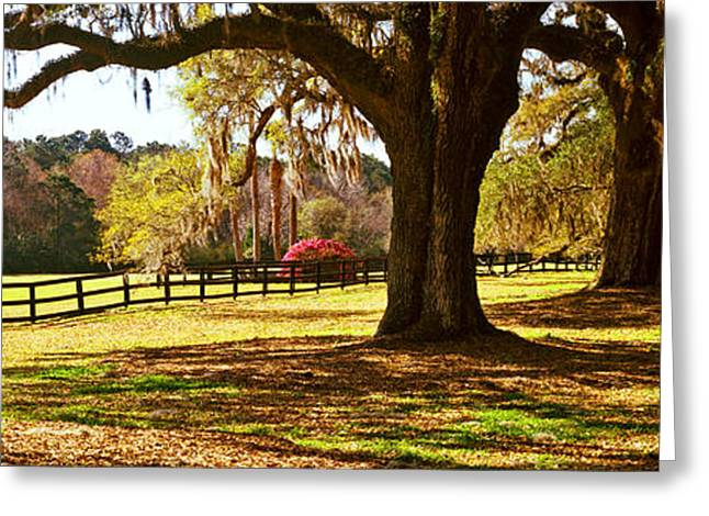 Trees In A Garden, Boone Hall Greeting Card