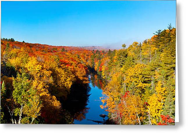 Trees In Autumn At Dead River Greeting Card
