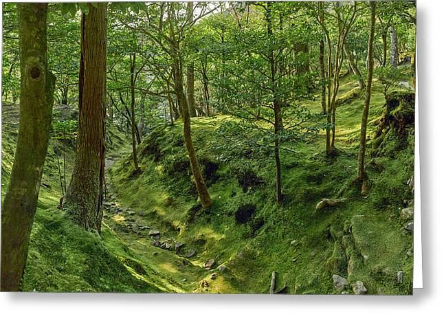 Trees In Temple Garden, Ginkaku-ji Greeting Card by Panoramic Images
