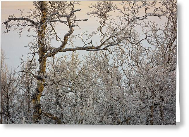 Trees In The Frozen Landscape, Cold Greeting Card