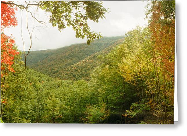 Trees On Mountain During Autumn Greeting Card