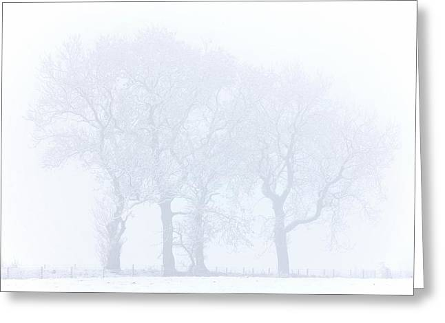 Trees Seen Through Winter Whiteout Greeting Card
