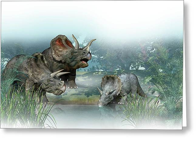 Triceratops Old And Young Greeting Card