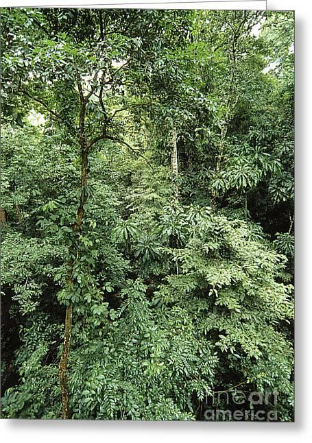 Tropical Rainforest, Panama Greeting Card