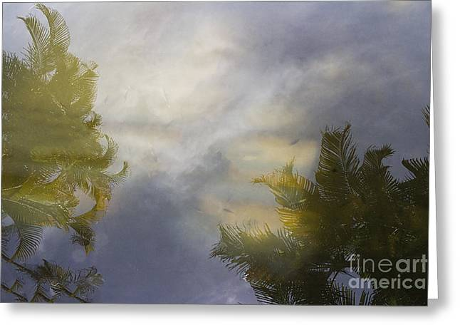 Tropical Reflections Greeting Card by Anne Rodkin