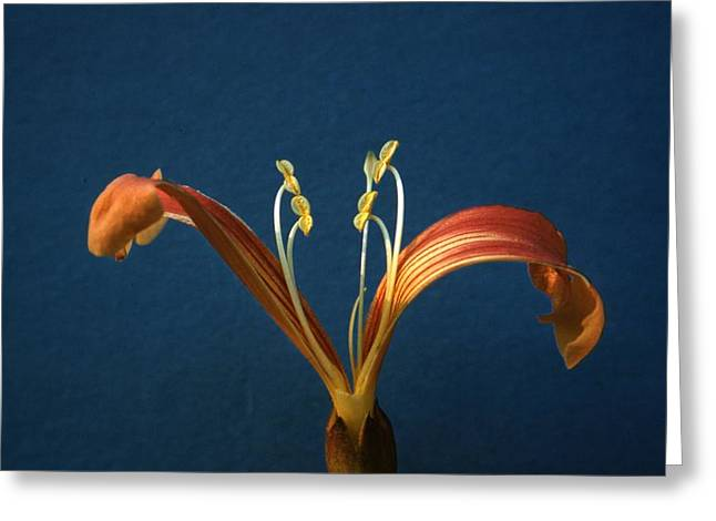 Trumpet Greeting Card by Retro Images Archive