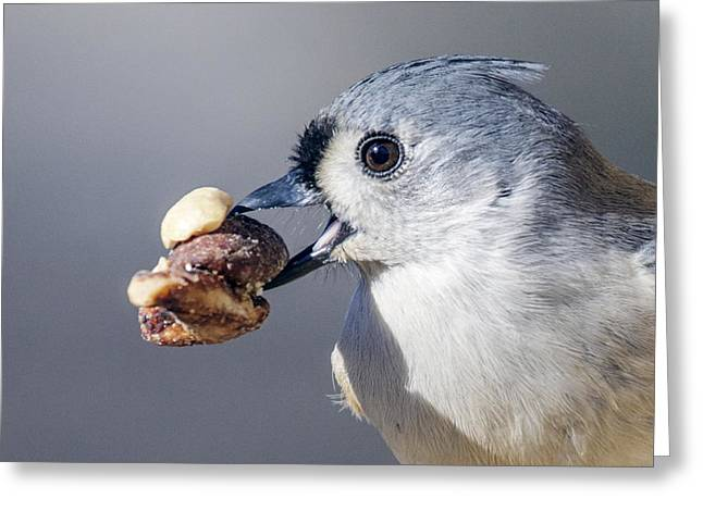 Greeting Card featuring the photograph Tufted Titmouse by David Lester