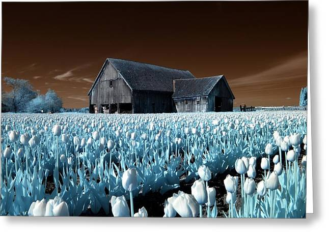 Greeting Card featuring the photograph Tulip Barn by Rebecca Parker