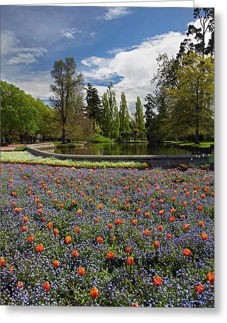 Tulips And Pond, Ashburton Domain Greeting Card by David Wall