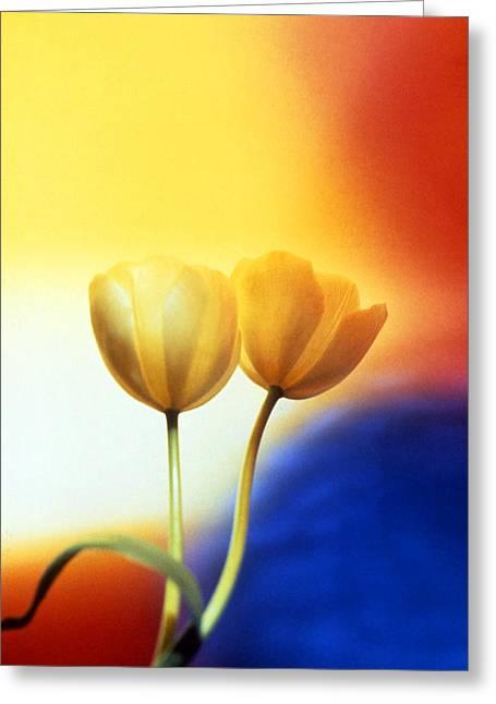 Tulips  Greeting Card by Etti PALITZ
