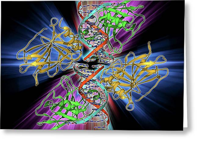 Tumour Suppressor Protein With Dna Greeting Card by Laguna Design