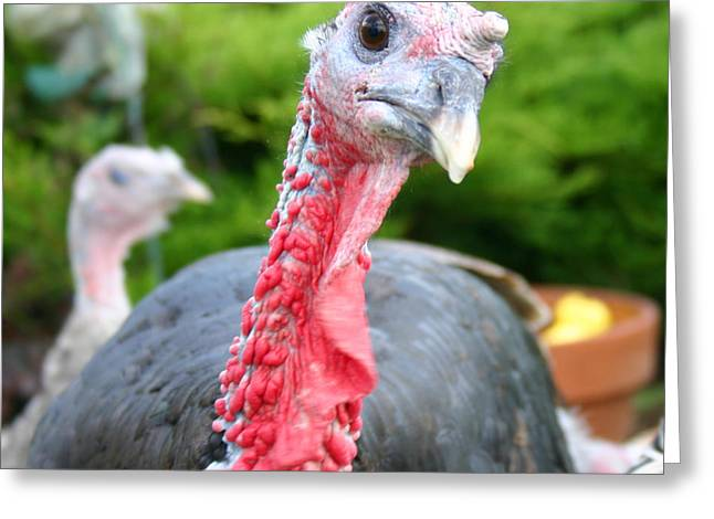 Turkey Face Off Greeting Card