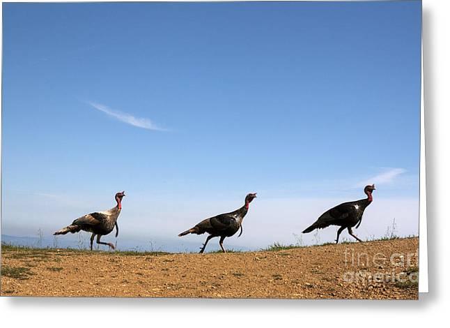 Turkey Stroll Greeting Card by Juan Romagosa