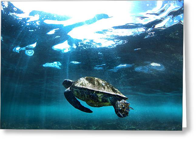 Turtle Rays Greeting Card by Sean Davey