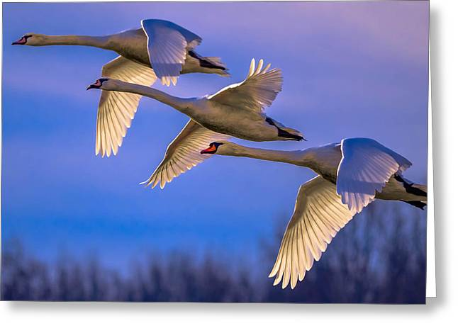 Twilight Flight Greeting Card by Brian Stevens