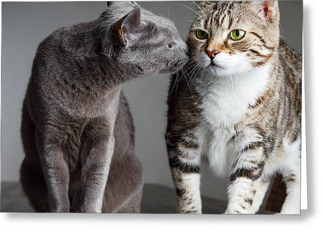 Two Cats Greeting Card by Nailia Schwarz