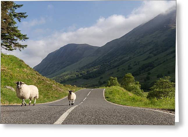 Two Sheeps Walking Along A Road In The Scottish Highlands Greeting Card by Leander Nardin
