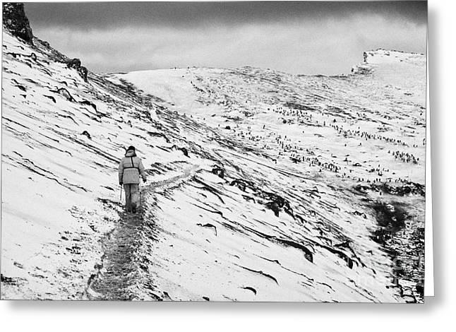two tourists walking along ridge at hannah point penguin colony Antarctica Greeting Card by Joe Fox