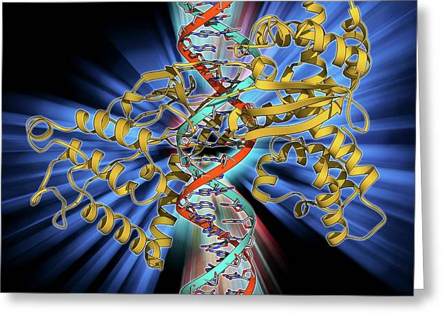 Type I Topoisomerase Bound To Dna Greeting Card by Laguna Design