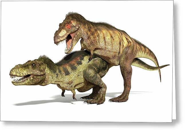 Tyrannosaurs Mating Greeting Card by Roger Harris