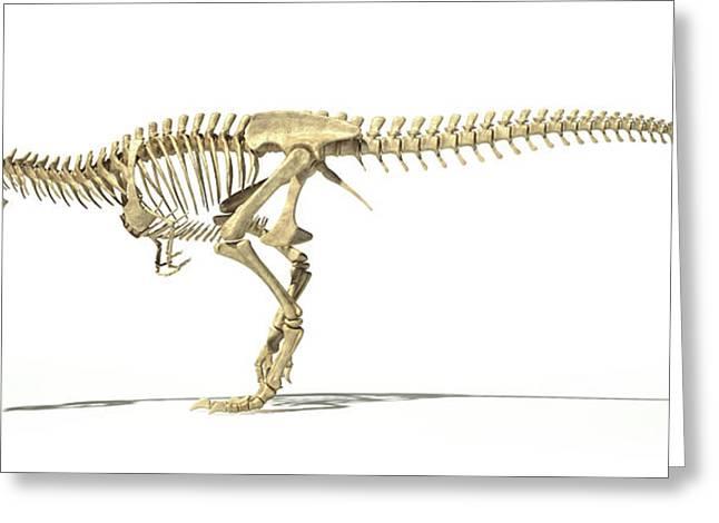 Tyrannosaurus Rex Skeleton Greeting Card by Leonello Calvetti