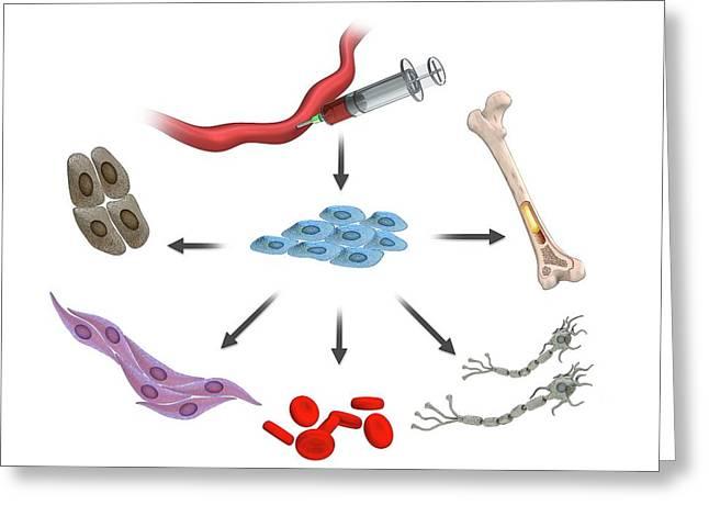 Umbilical Stem Cells Greeting Card