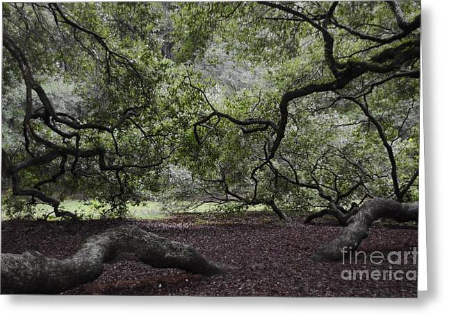 Under The Tree Greeting Card by Kathleen Struckle