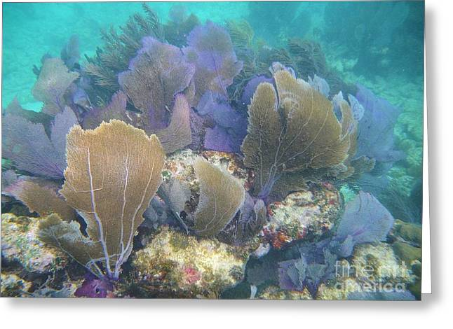 Underwater Fans Greeting Card by Adam Jewell