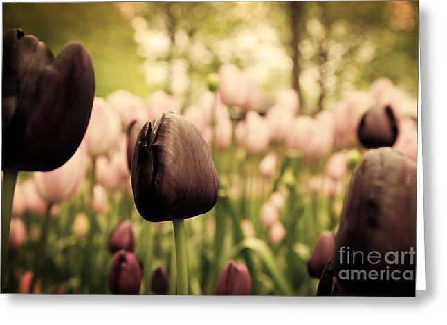 Unique Black Tulip Flowers In Green Grass Greeting Card by Michal Bednarek