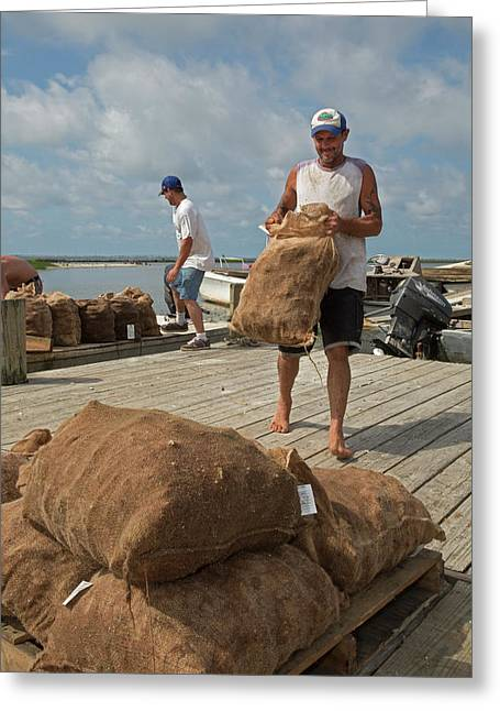 Unloading Harvested Oysters Greeting Card by Jim West