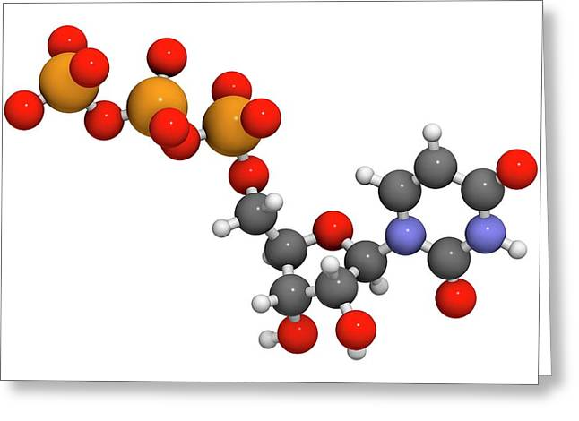 Uridine Triphosphate Nucleotide Molecule Greeting Card