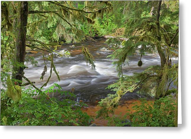 Usa, Alaska, Anan Creek Greeting Card by Jaynes Gallery
