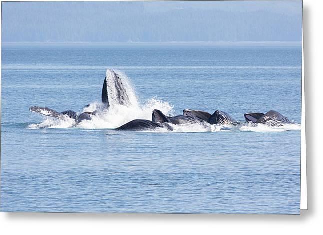 Usa, Alaska, Freshwater Bay Greeting Card
