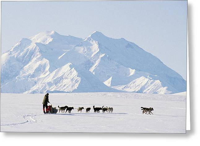 Usa, Alaska, Sled Dogs, Park Ranger Greeting Card