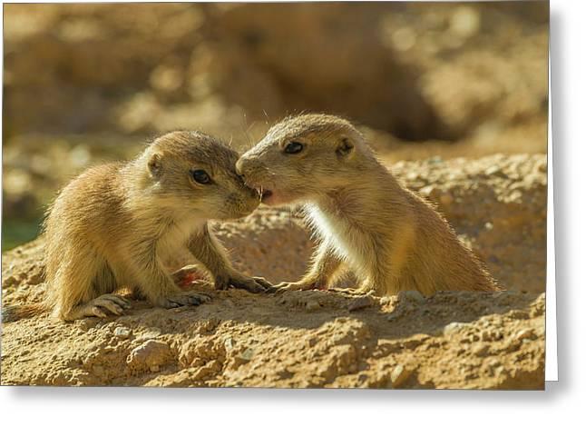 Usa, Arizona, Arizona-sonora Desert Greeting Card