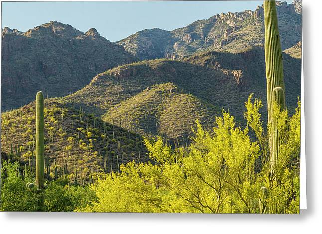 Usa, Arizona, Coronado National Forest Greeting Card by Jaynes Gallery