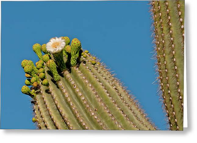 Usa, Arizona, Tucson, Saguaro National Greeting Card