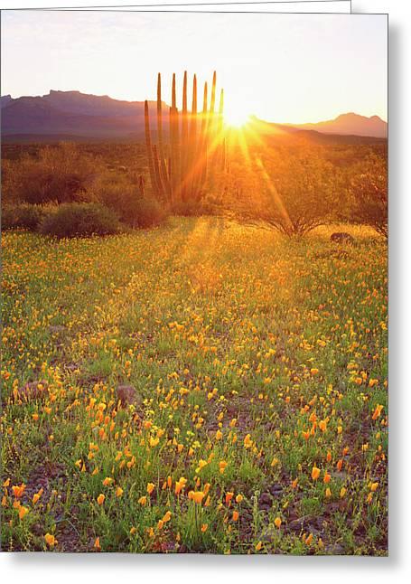 Usa, Arizona, Wildflowers And Cacti Greeting Card
