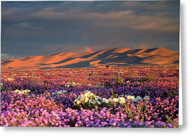Usa, California, Dumont Dunes Greeting Card by Jaynes Gallery