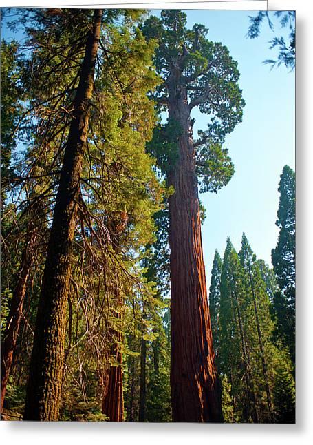 Usa, California, Sequoia, Kings Canyon Greeting Card by Bernard Friel
