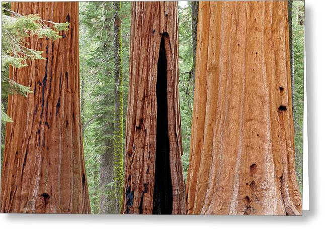 Usa, California, Sequoia National Park Greeting Card