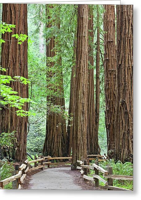 Usa, California Trail Through Muir Greeting Card