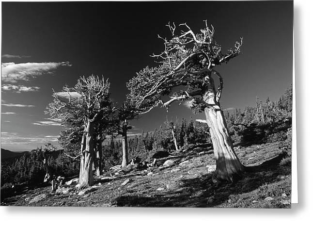 Usa, Colorado, Arapaho National Forest Greeting Card by Adam Jones