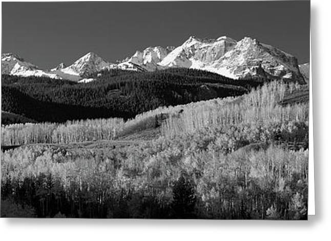 Usa, Colorado, Rocky Mountains, Aspens Greeting Card by Panoramic Images