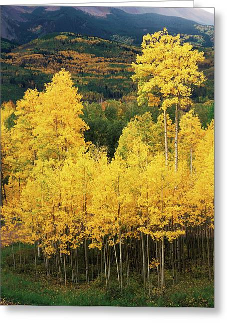 Usa, Colorado, Telluride, View Greeting Card