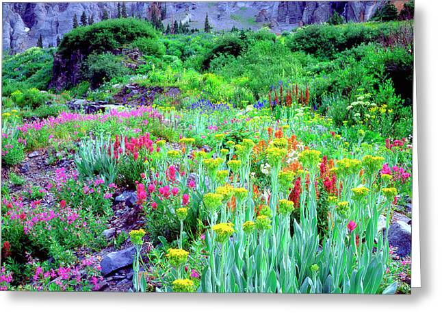Usa, Colorado, Wildflowers In Yankee Greeting Card by Jaynes Gallery